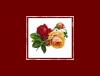 AURORA-rukotvorine j.d.o.o. logo