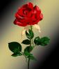 Caffe bar Roses logo