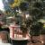 Cafe bar FRANZ logo